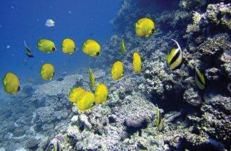 duikschool_hurghada.jpg